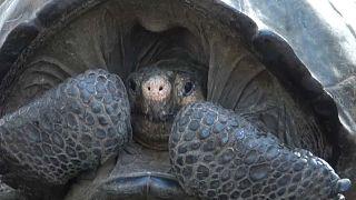 Обнаружена черепаха, считавшаяся вымершей
