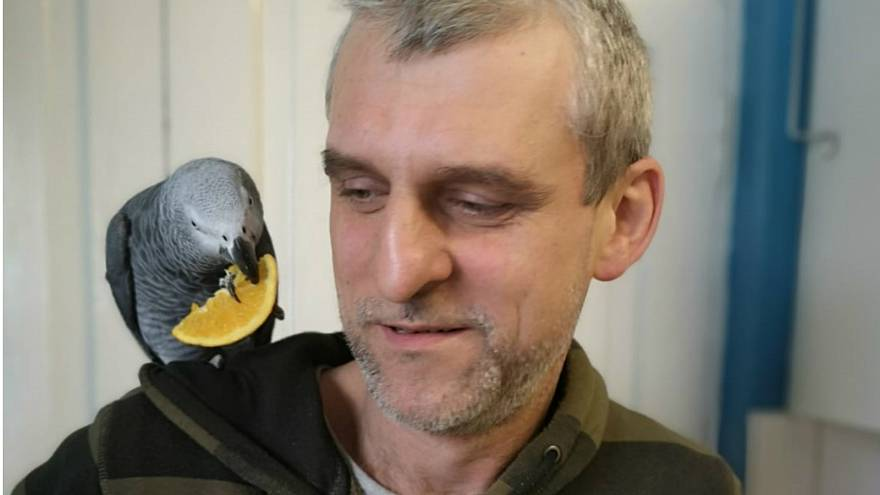 Dublin's 'pet detectives' identify parrot owner using Slovak voice recordings