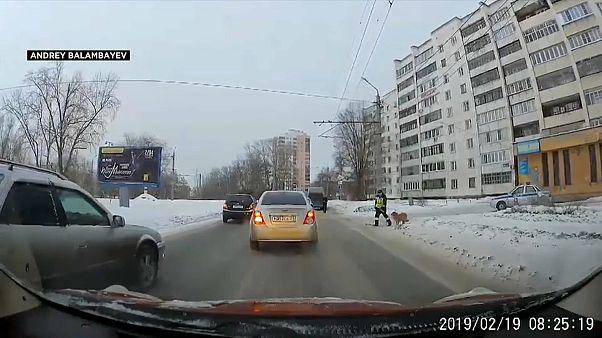 شاهد: شرطي روسي يساعد كلباً في عبور الطريق عبر إيقاف السير