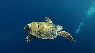 Napoli: aperto al pubblico il centro per la cura delle tartarughe marine