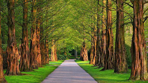 أستراليا تعلن عن خطة لزراعة مليار شجرة بحلول عام 2030