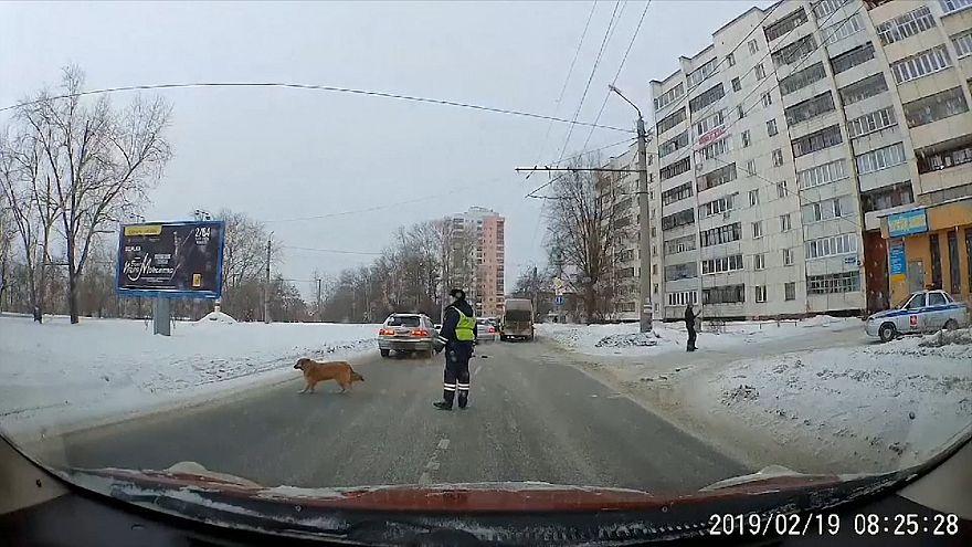 ВИДЕО | Челябинский полицейский помог хромой собаке