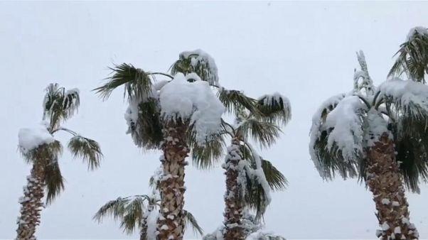 أشجار نخيل مغطاة بالثلج في لاس فيغاس - الولايات المتحدة الأمريكية