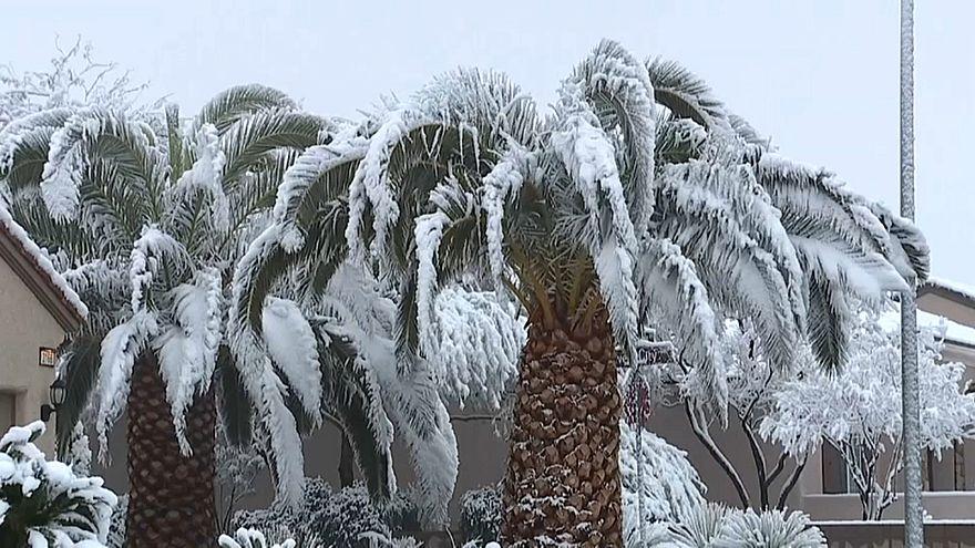 Hó fedte a Las Vegas-i pálmafákat