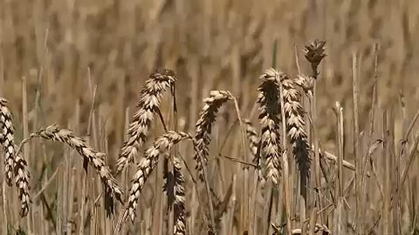 Több pénzt adhatnak a gazdáknak az EU tagállamai