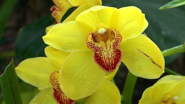 Orchideakiállítás New York-ban