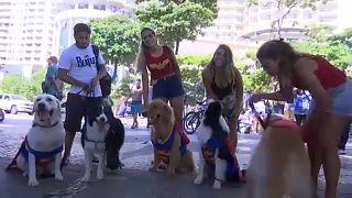 """Cães """"mascaram-se"""" e desfilam em Copacabana"""