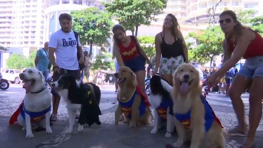 """شاهد"""" الكلاب الخارقون"""" في مهرجان ريو دي جانيرو الاستعراضي"""