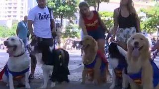 فستیوال خیابانی حیوانات خانگی در برزیل