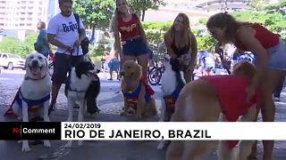 Jelmezes kutyakarnevál Rio de Janeiróban
