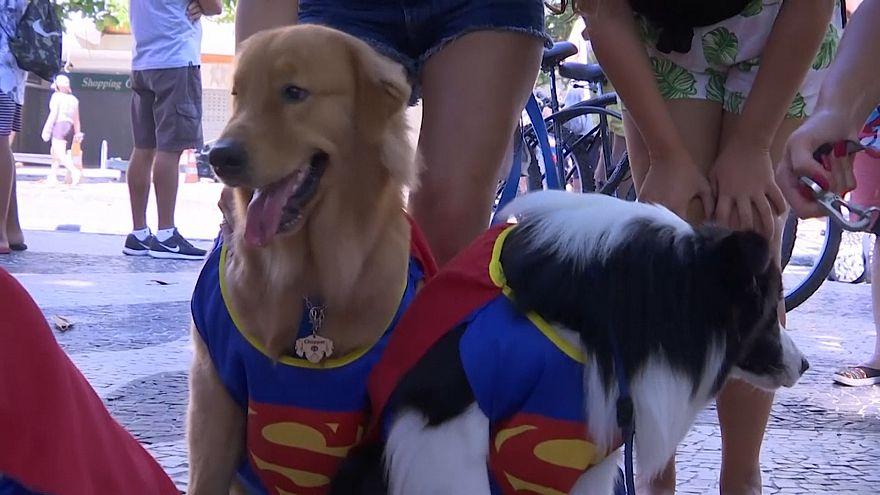 Hunde-Straßenkarneval von Blocao in Rio de Janeiro