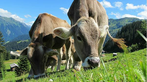 Austrian farmer handed enormous fine over cow stampede that killed German woman