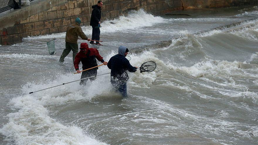 """Pêche miraculeuse à Malte : des poissons """"volaient"""" dans les rues"""