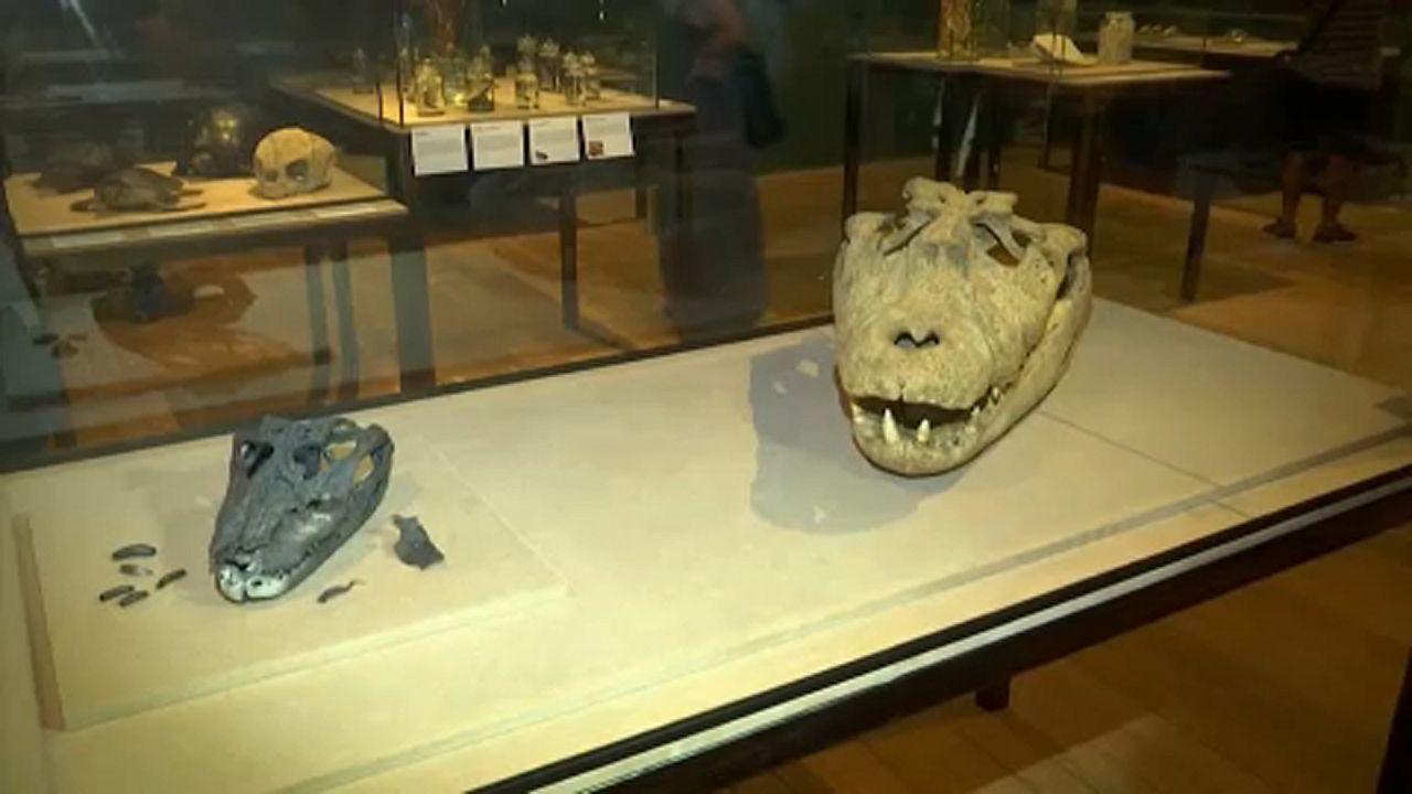 """Peças """"resgatadas"""" de incêndio no Museu Nacional expostas"""