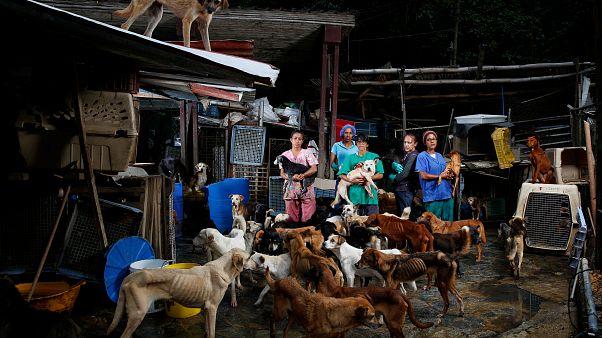 Refugio de perros Famproa, Estado Miranda. Venezuela. 25 de febrero 2016.