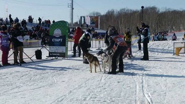 Canine competitors gather in Russia for one of the longest dog sled races in the world
