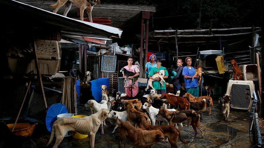 В Венесуэле оставлены на произвол судьбы миллионы животных