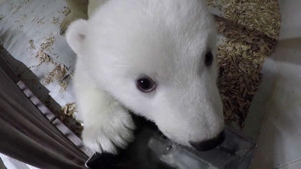 """Nuevas imágenes del """"peluche""""del zoo de Berlín"""