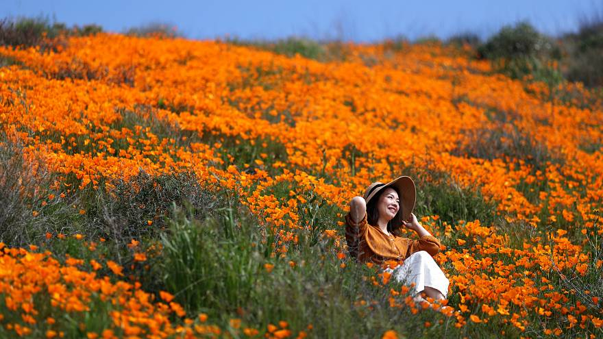 Heavy rains prompt super bloom of poppies in California
