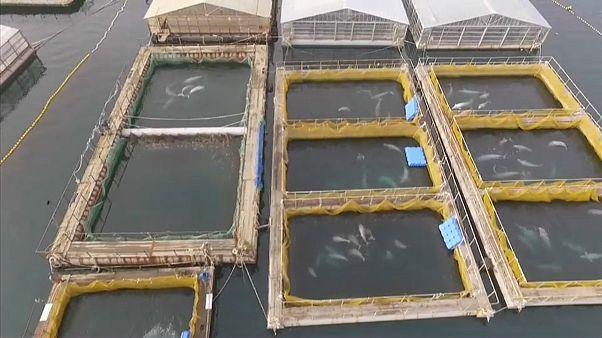 """Governo russo denuncia """"prisão de baleias"""""""