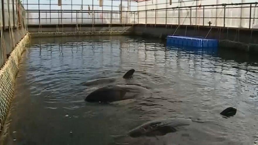 """شاهد: """"سجن الحيتان"""" في أقصى الشرق الروسي محل شكاوى مسؤولين من روسيا"""