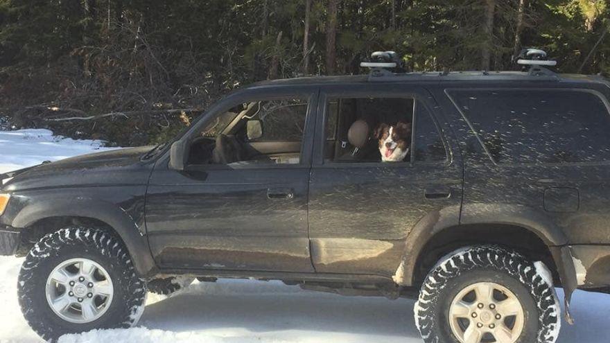 ABD: Aracı kara saplanan sürücü şili sosuyla 5 gün hayatta kaldı