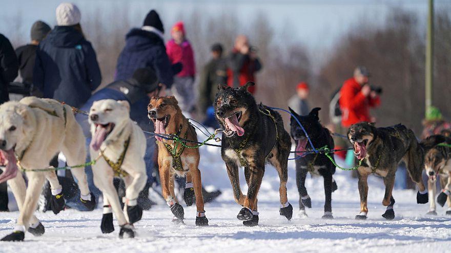 Tiltakozással indult a világ legnagyobb kutyaszánhúzó versenye