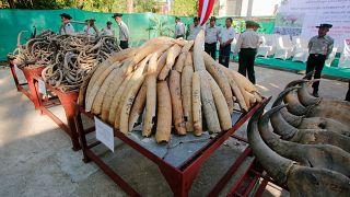 Elefántagyarakat semmisítettek meg Mianmarban