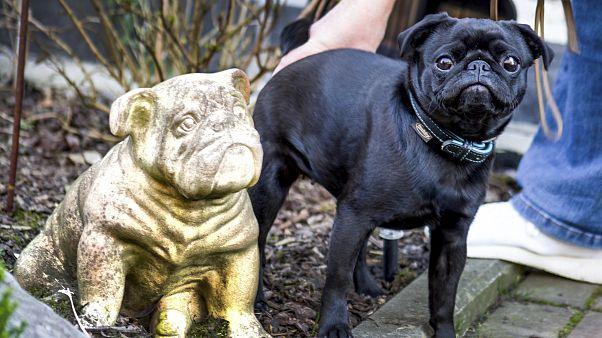 Γερμανία: Ο δήμος πόλης έβγαλε στο eBay το σκυλάκι μιας οικογένειας που είχε χρέη!