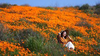 امرأة تجلس وسط الأزهار
