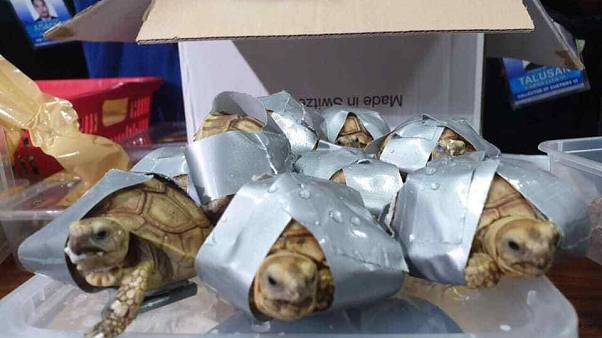 The reptiles were found wrapped in tape