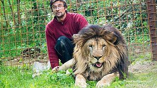 Illegal gehaltener Löwe tötet seinen Besitzer (33)