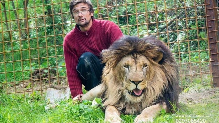 République tchèque  : un homme tué par son lion qu'il élevait sans autorisation