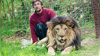 رجل تشيكي يفارق الحياة بعد أن هاجمه أسد رباه كحيوان أليف