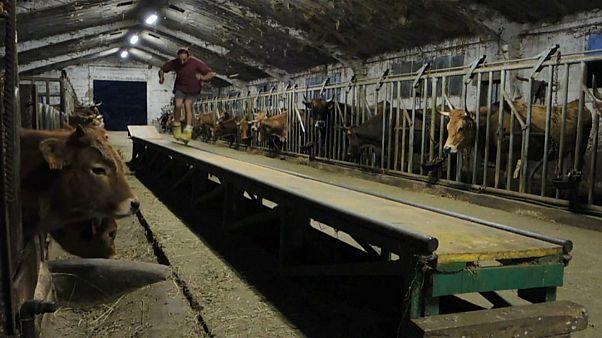 اسپانیا؛ اسکیت سواری در طویله گاوها