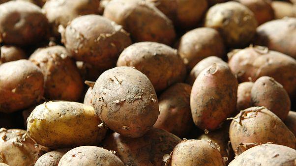 Patateste gümrük vergisi kaldırıldı