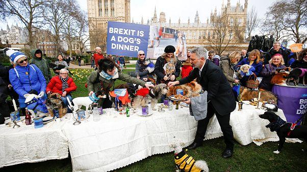 """Des chiens """"anti-Brexit"""" mangent devant le Parlement"""