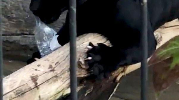 USA: Jaguar fällt Zoo-Besucherin an
