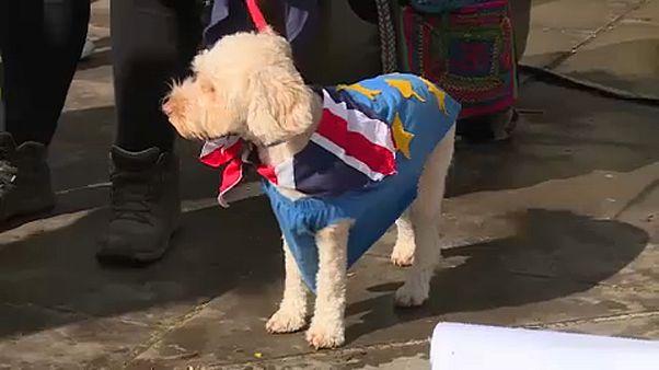 """Лондон: владельцы собак против """"брексита"""""""