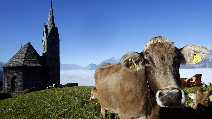 Austria to release 'code of conduct' on how hikers should act around grazing cows