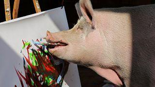Pigcasso, la truie d'Afrique du Sud qui a du flair pour l'art