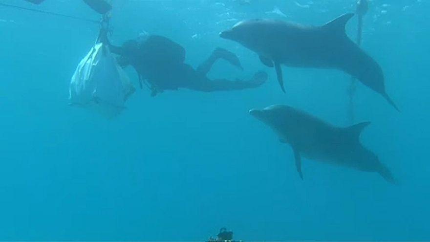 شاهد: إسرائيل تنقل الشعاب المرجانية في منتجع إيلات