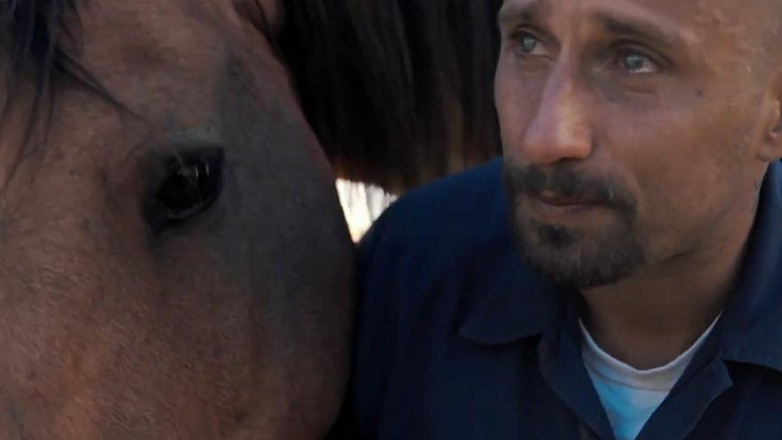 """""""Mustang"""" - das wilde Pferd als Therapeut"""