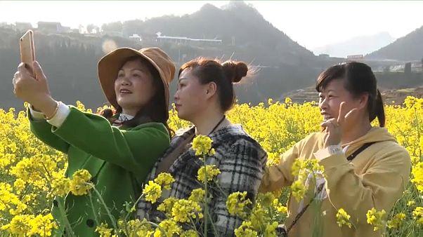 Blühende Rapsfelder in Guizhou