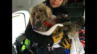 Шотландия: как псу не дали погибнуть в горах