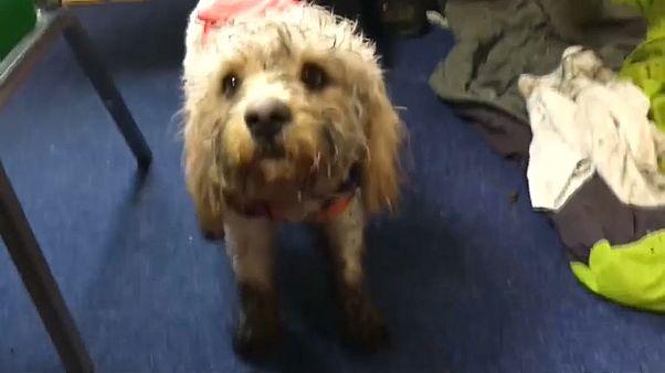 شاهد: عملية إنقاذ كلب بواسطة مروحية في اسكتلندا