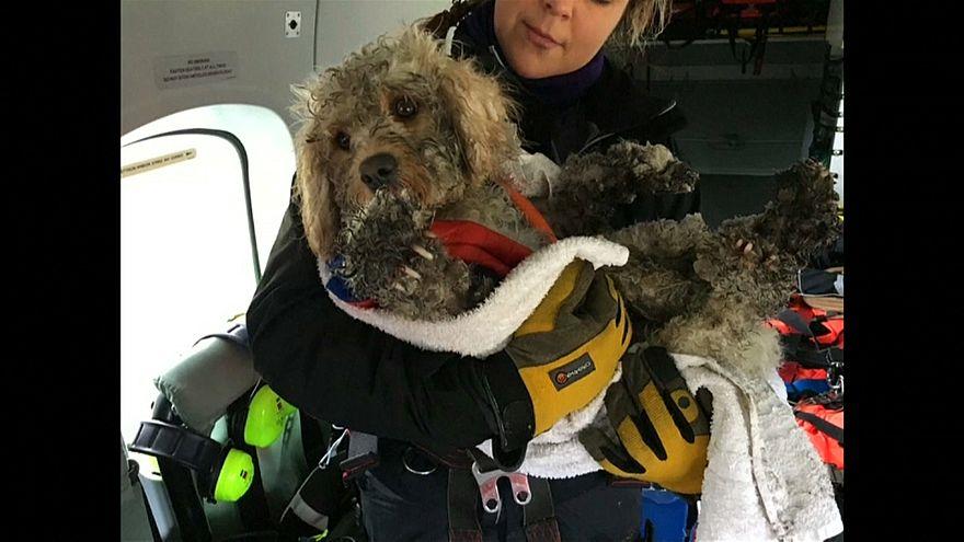 Scozia: cane salvato da Guardia Costiera in elicottero