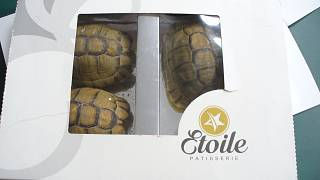 Schildkröten als Schokolade getarnt: Schmuggler in Berlin erwischt