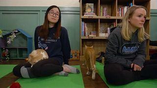 Μαθήματα γιόγκα παρέα με...γάτες
