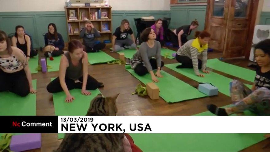 E se fizesse ioga numa sala cheia de gatos?